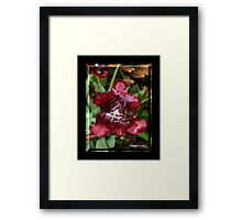 BLOOD RED Framed Print