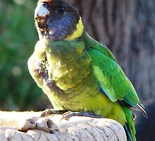 Twenty Eight Parrot by Coralie Plozza