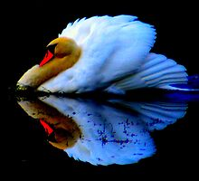 Dark Swan by pjm123