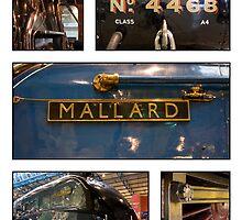 The Mighty Mallard by Dave Warren