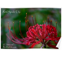 Red Spider Lily Poster