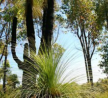 """Grass Trees""  by Nathan  Johnson"
