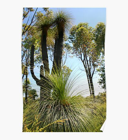 """Grass Trees""  Poster"