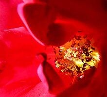 Inner Sanctum Red by BecsPerspective