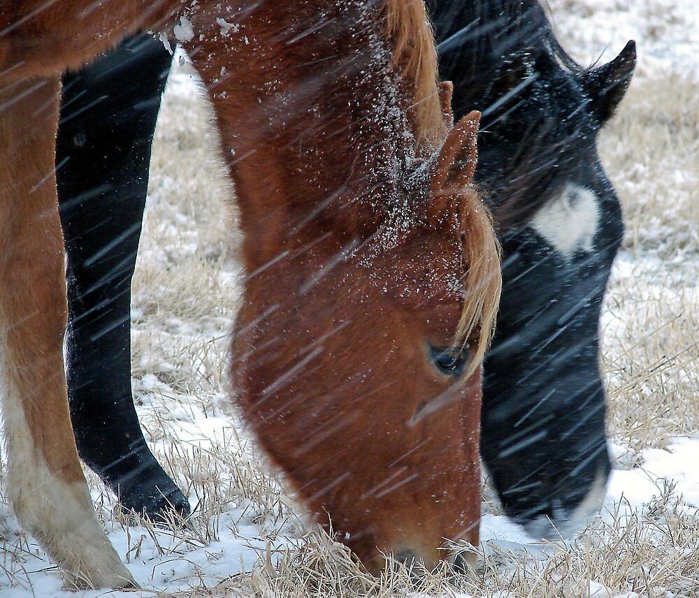 Snowy Eats by angelandspot