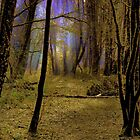 Wizards Wood by relayer51