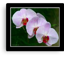 Sensuous Canvas Print