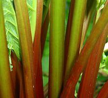 Ruby Rhubarb  by coffeebean