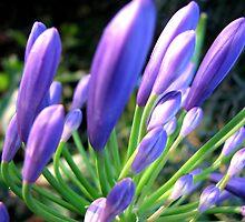 Springtime by Kathie Nichols