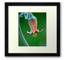 Colour magnified Framed Print