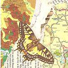 Papillion by Jemma Bracken