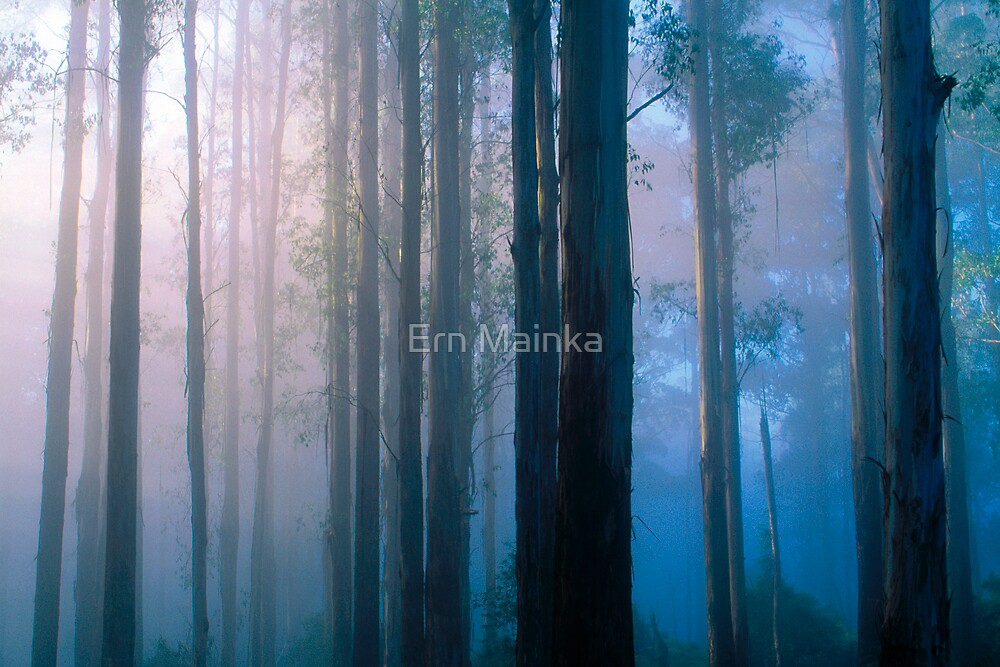 Forest Sunrise by Ern Mainka