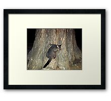Hello Possum Framed Print