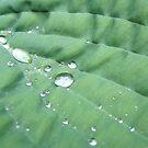 Leaf Diamonds by Chris Wood