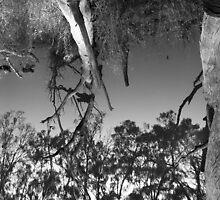 Upside Down by Ross Jardine