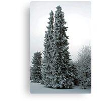 Snow in the garden Canvas Print
