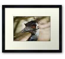 Big brown eyed bird Framed Print