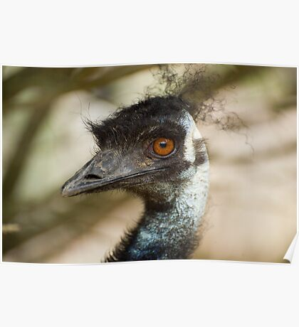 Big brown eyed bird Poster