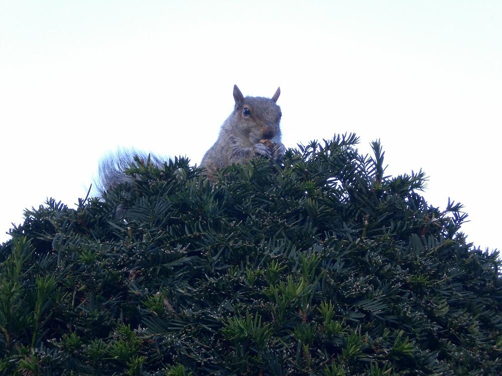 squirrel! by Jonathon Horner