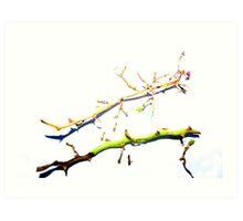 Grape Stalks  Art Print