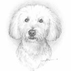 Bichon drawing by Mike Theuer