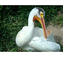 Pelican closeup Photographic Print