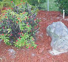 bush,photo,green,stone,white,orange,mulch by karen66