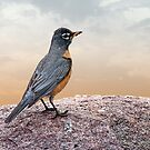 Robin on a Precipice by Bonnie T.  Barry