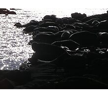Seals Photographic Print
