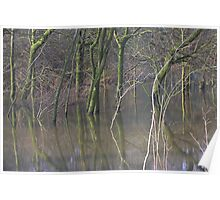 Flooded Woodland Makes a Cool Mirror Image  Poster