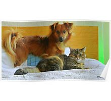 Puppy lovemy spanish rescue puppy and older kitty Bing ...  Poster