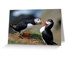 Puffin Courtship Greeting Card