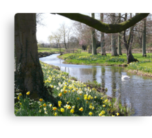 Springtime on a river bank in Norfolk Canvas Print
