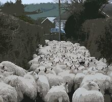 Road full of Sheep by joconti