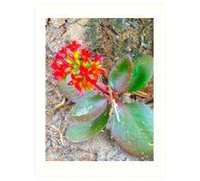 Florida Plant Art Print