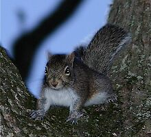 Guard squirrel by Jim Caldwell