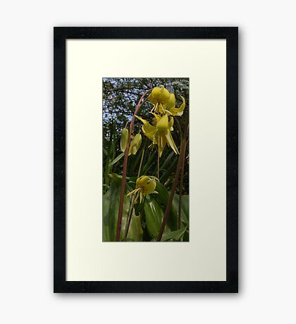 gental giants Framed Print