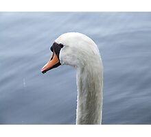 Swan - Parent Photographic Print