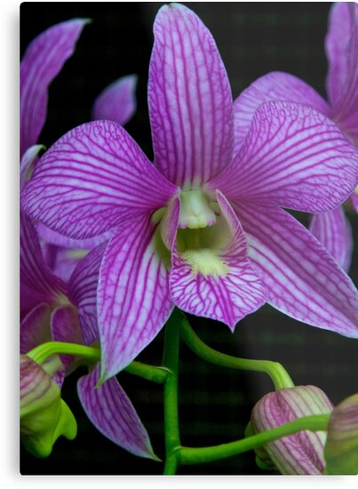 Extraordinary Orchid by John Butler