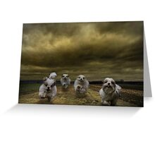 the four fluffy dogs of the Apocalypse Greeting Card