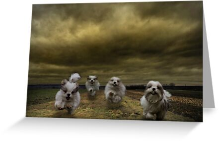 the four fluffy dogs of the Apocalypse by Dan Shalloe