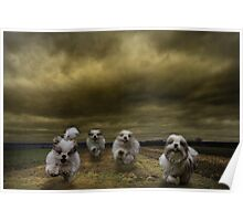 the four fluffy dogs of the Apocalypse Poster