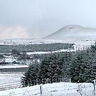 Falkland Hill in Winter by Steven McEwan