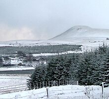 Falkland Hill in Winter by Steven McEwan