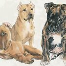 American Staffordshire Terrier Puppies by BarbBarcikKeith