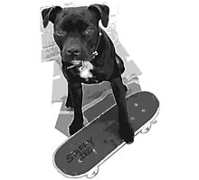 SK8 Staffy Dog black and white Photographic Print
