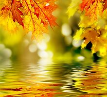 Leaves on the water by samandoliver