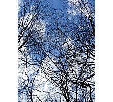 Webbed sky Photographic Print