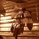 House Plant II by Allison Floyd