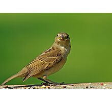 Sparrow Photographic Print